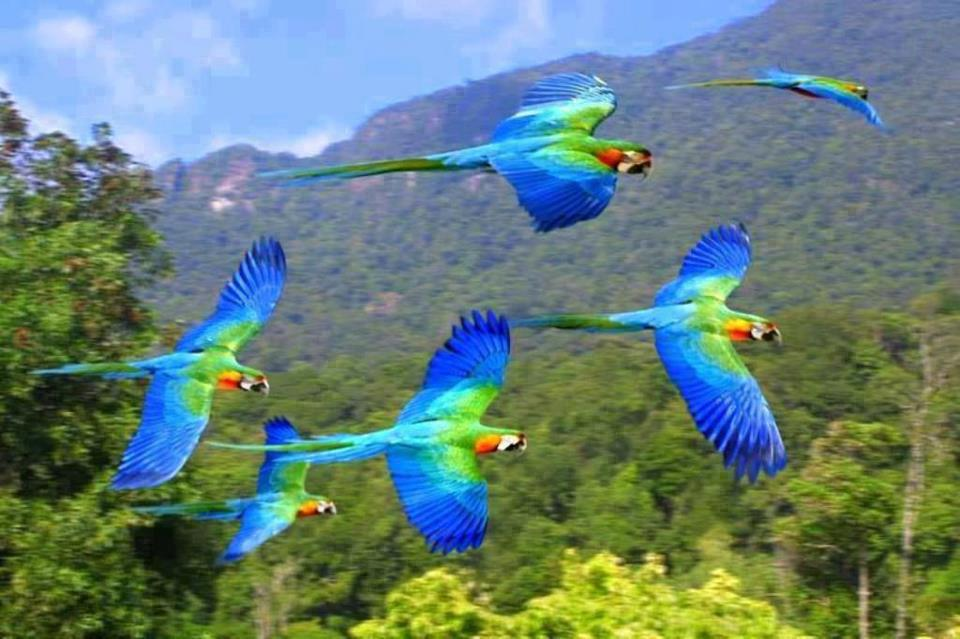 blue_flying_birds
