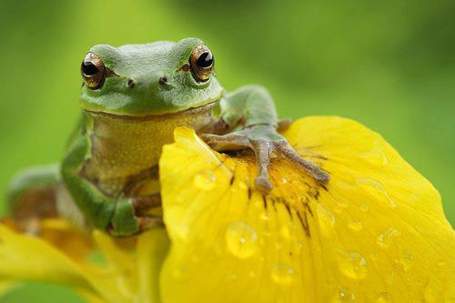 green_frog_yellow_leaf