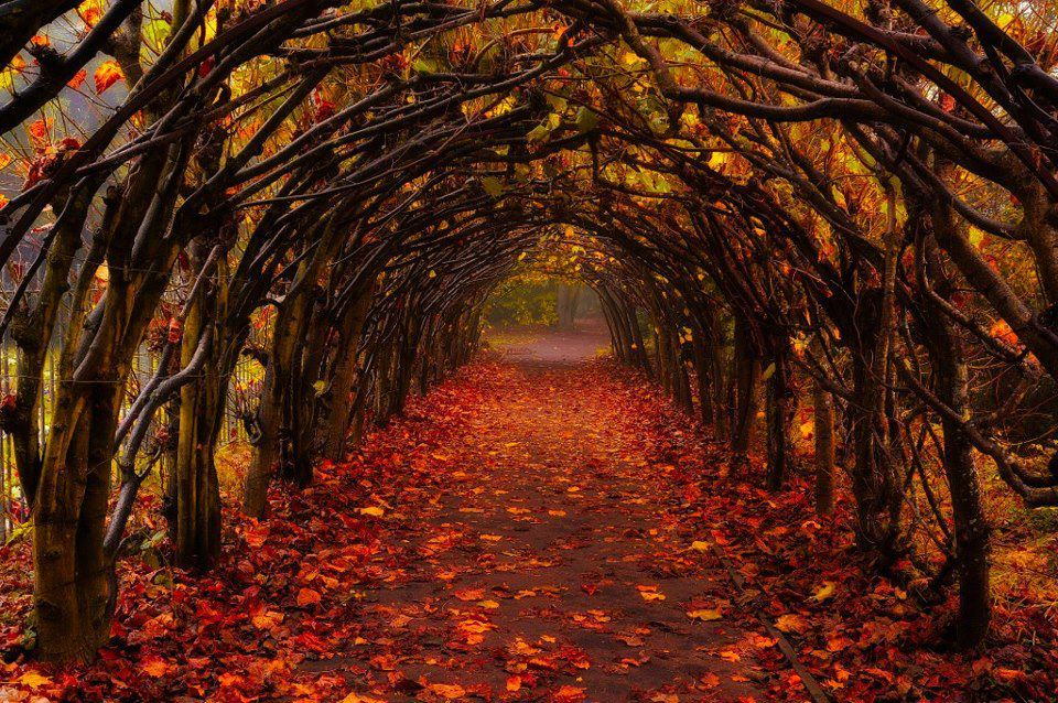red_leafy_archway