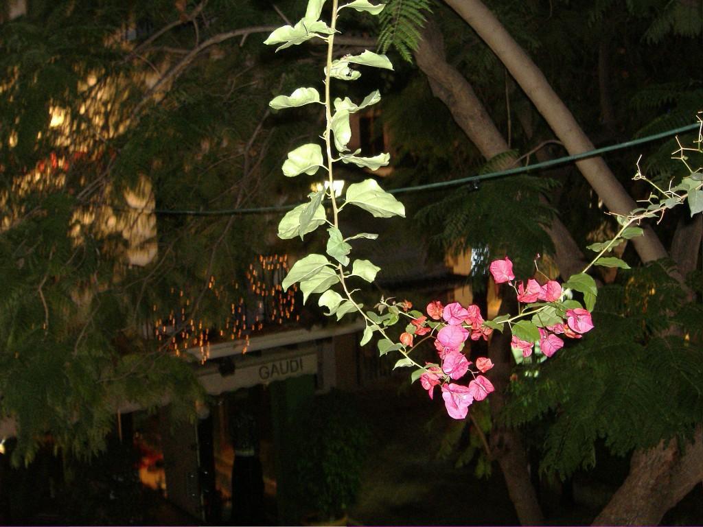 Marbella Mindfulness retreats