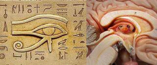 eye_of_horus_and_cross_section_of_pineal_gland